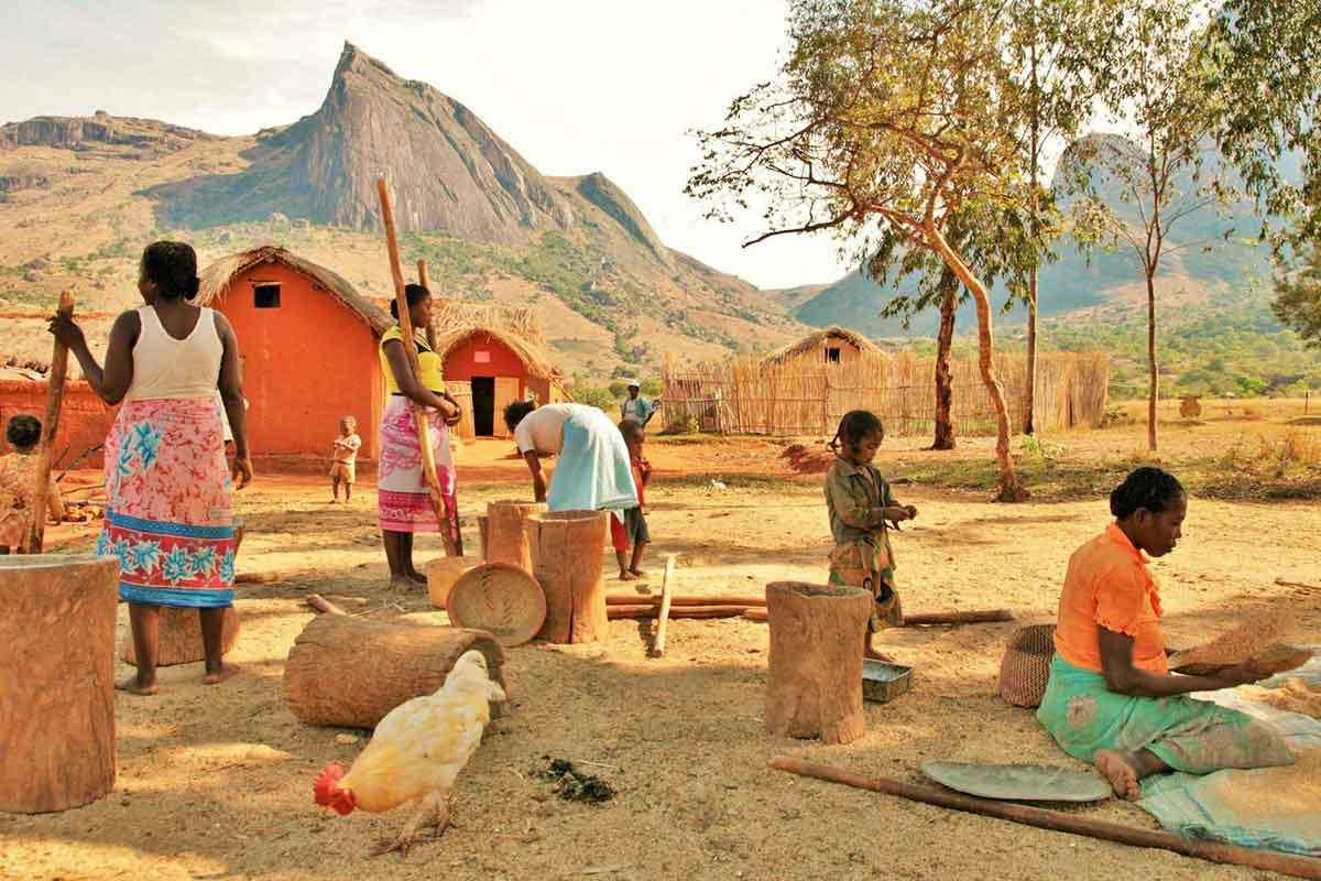 Pillage du riz dans l' Andringitra